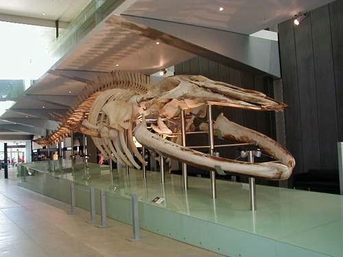 Museo de Melborune-Australia