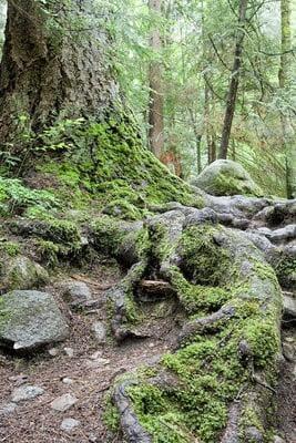 naturaleza viva bosque