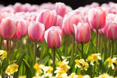 naturaleza viva flores