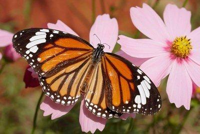 naturaleza viva mariposa