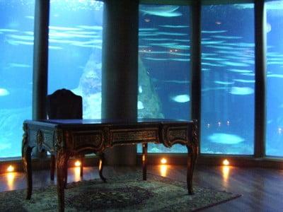 Nautilus del Aquarium de A Coruña