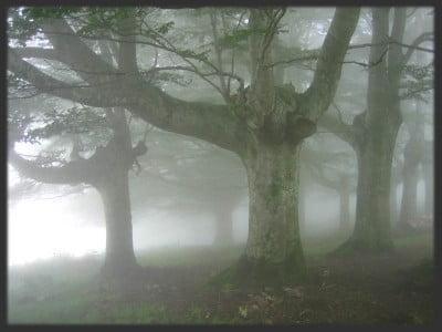Niebla inglesa