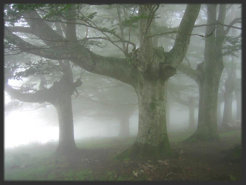 neblina gay Méjico