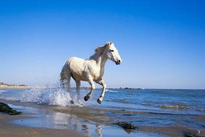 paisajes con animales caballo