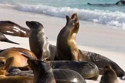 paisajes con animales lobos marinos