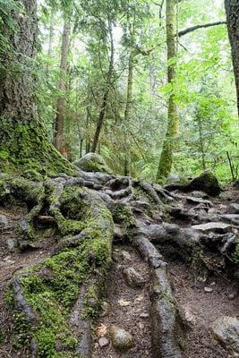 paisajes de bosques árboles