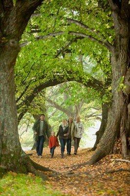 paisajes de bosques caminando