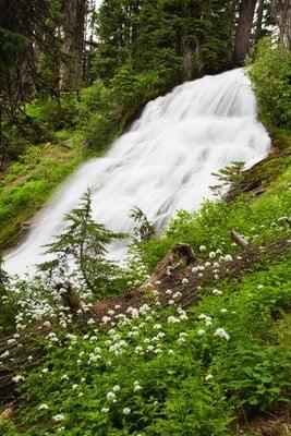 paisajes de bosques cascadas