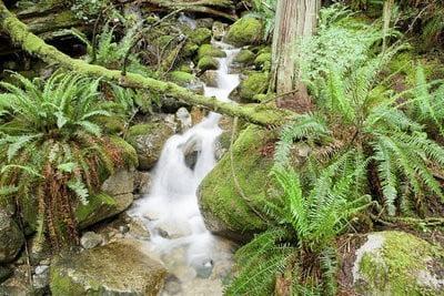 paisajes de naturaleza  Un arroyo en el interior de un bosque