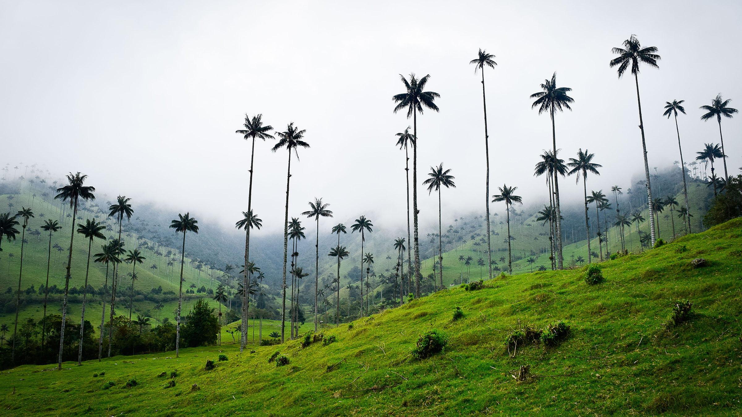 paisajes del campo árboles