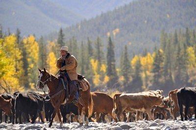 paisajes humanos con el ganado