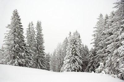 paisajes invernales los árboles