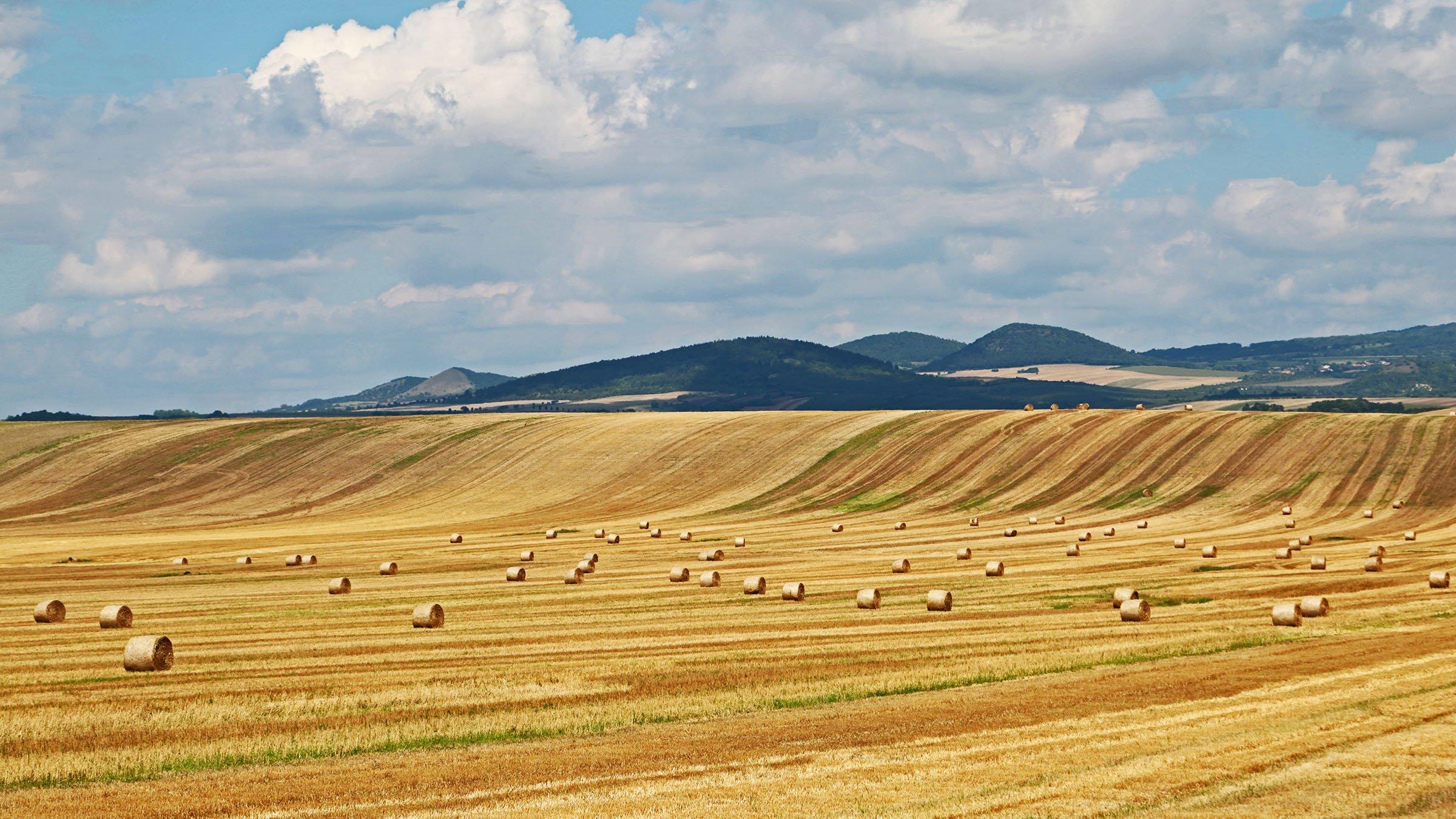paisajes rurales cosecha