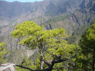 Parque de la Caldera de Taburiente