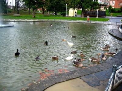 Parque de los patos de Bilbao