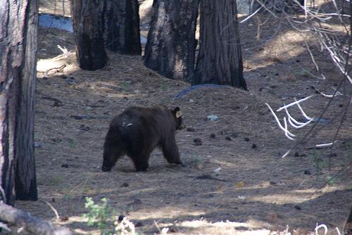 Paseando por el Parque Nacional de Yosemite