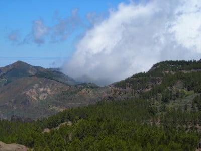 Pinares del Parque del Nublo