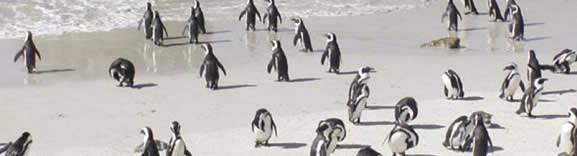 Pinguinos de Victoria, Africa