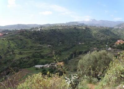 Pino Santo, Canarias