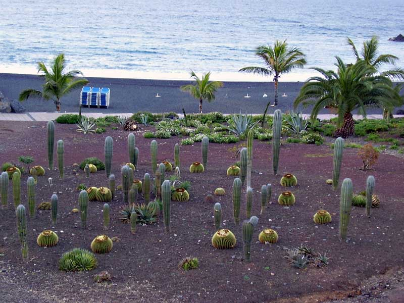 Playa jard n tenerife for Jardin caleta tenerife sur
