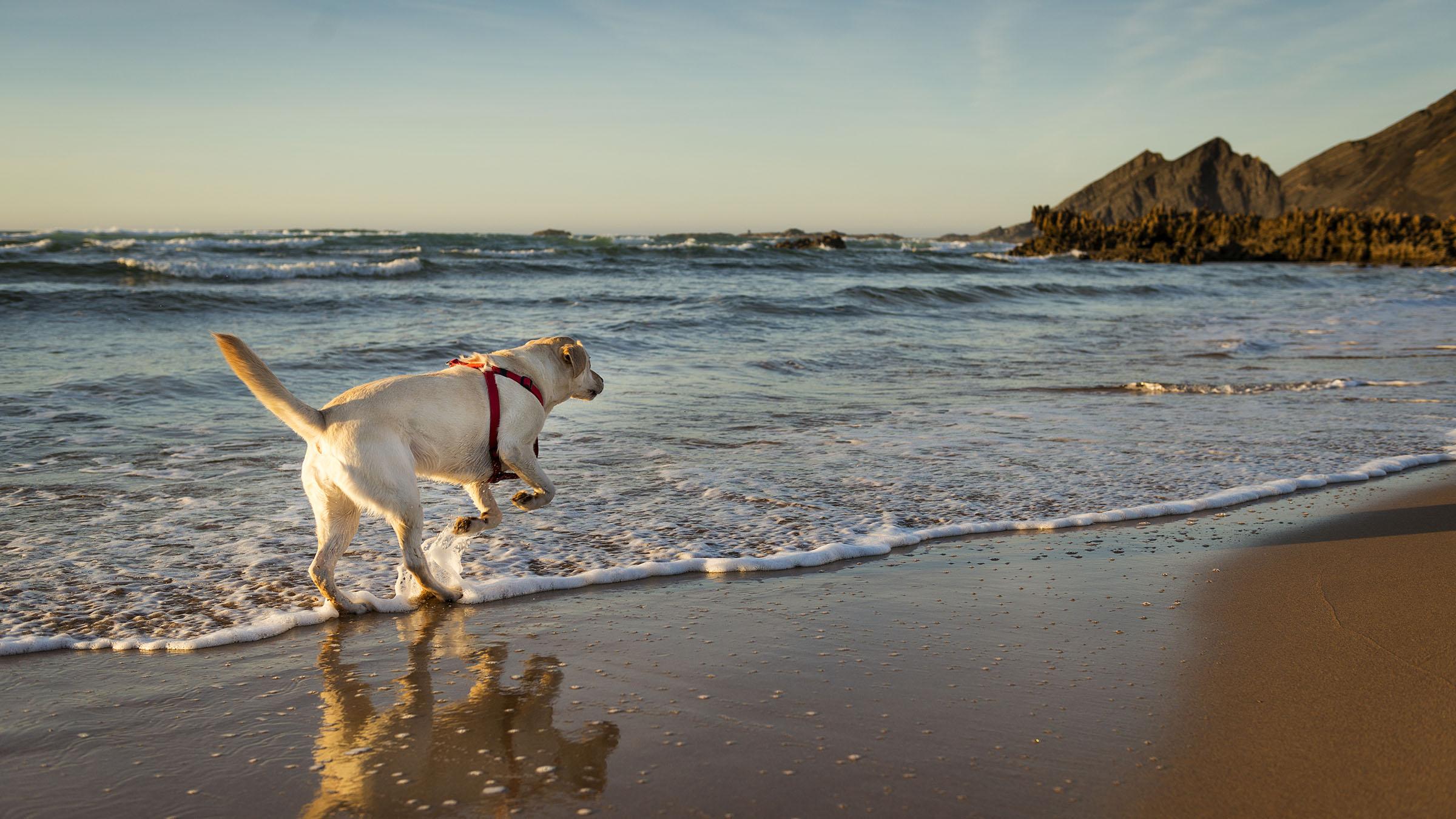 Playas de portugal que admiten perros - Banarse con delfines portugal ...