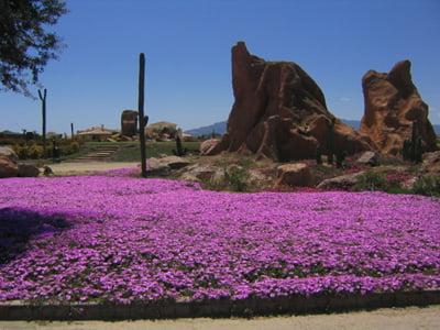 Primavera de Almería