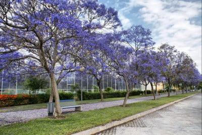 Primavera en Málaga