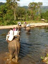 Recorrido en Elefante, Asia