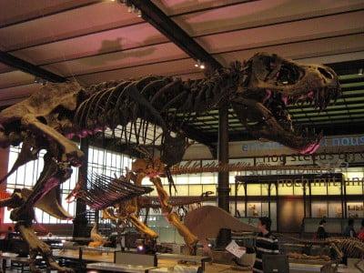 Esqueleto del Tiranosaurio Rex en el Museo de Ciencias Naturales