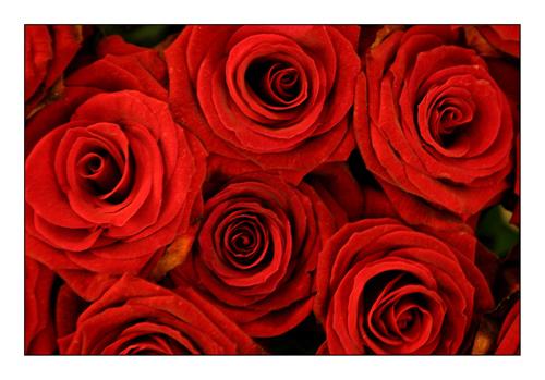 El milagro de las rosas