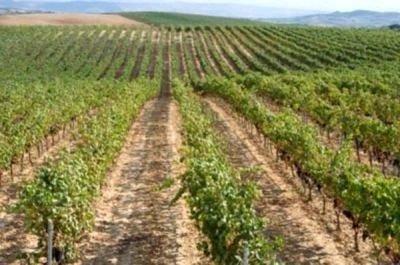 Rutas por la Rioja  viñedos