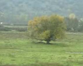 Rutas por la Sierra Árbol de Bilbo