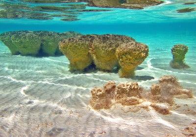 shark-bay-australia