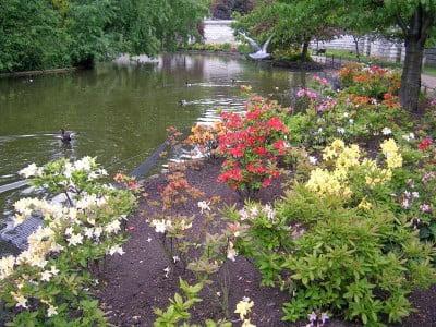 Flores de St. James Park