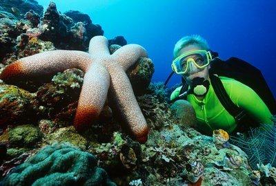 submarinismo en Alicante en el fondo del mar