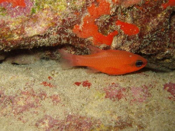 Submarinismo en Fuerteventura
