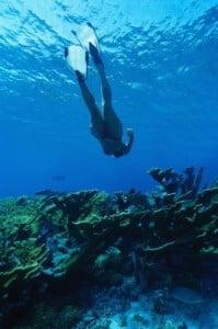 Submarinismo en Tenerife  buceando