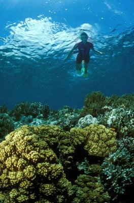 Submarinismo en Tenerife  exlporando