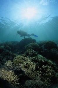 Submarinismo en Valencia explorando