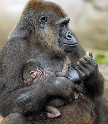 Animal de Taronga Zoo