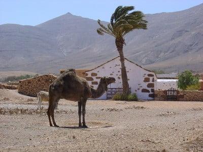 Tefía, Fuerteventura