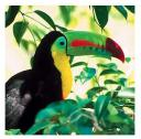 Tucan Costa Rica para de la exotica fauna de Costa Rica
