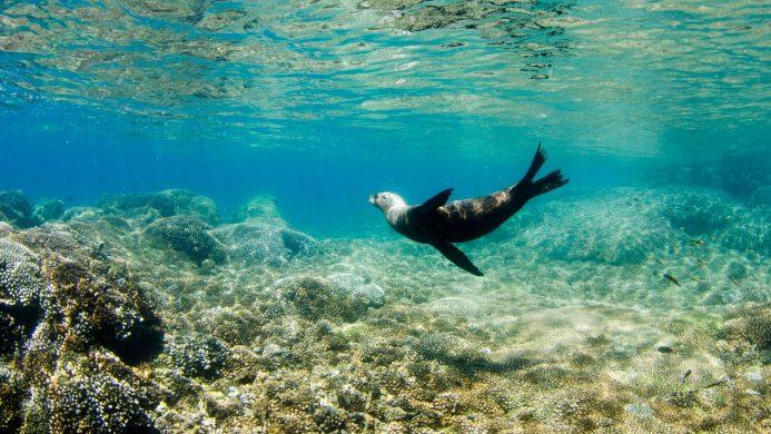 Ekoturismoa Mexiko Baja California Sur-en