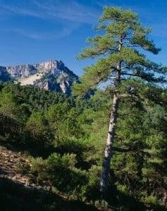 Turismo rural en Cazorla sierra