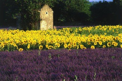 Turismo rural en Francia flores