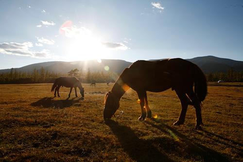 Turismo Rural en Mongolia