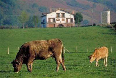 Turismo rural en Navarra ganado