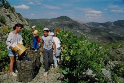 Turismo rural en Portugal trabajando