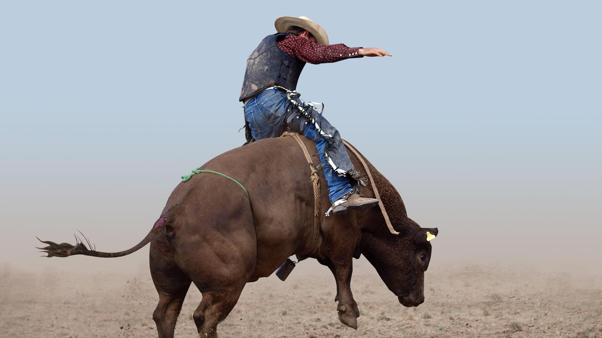 Los chaps , pantalones típicos del traje de vaquero