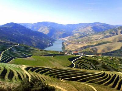 Viñedos de Portugal